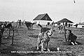 Sled dogs at Aklavik - N-1979-050-0004.jpg