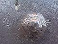 Slightly Rusted Bolt - Flickr - Joshua Rappeneker.jpg