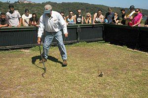 Snake Man of La Perouse - Image: Snake man snake lizard