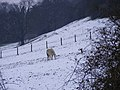 Snowy Field - geograph.org.uk - 1111975.jpg