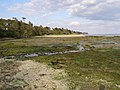 Solent shore near Inchmery House, tide out - geograph.org.uk - 178802.jpg