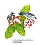 Картина двух серых птиц с бледным низом среди растительности