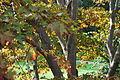 Speke Hall Trees.jpg