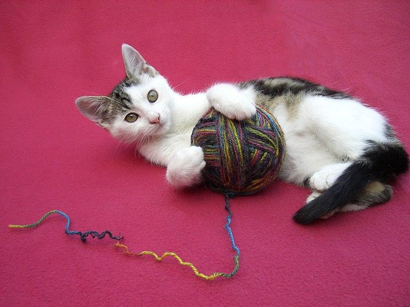 File:Spielendes Kätzchen.JPG