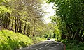 Spring, Minnowburn Beeches near Belfast - geograph.org.uk - 1275201.jpg