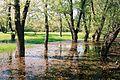 Spring flooding in the Volga-Akhtubinskaya floodplain.JPG