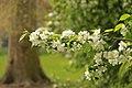 Spring in London (7119665697).jpg