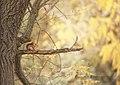 Squirrel (181770929).jpeg