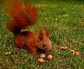 Squirrelwarsaw2.jpg