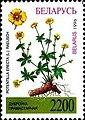 Stamp of Belarus - 1996 - Colnect 278454 - Potentilla erecta.jpeg