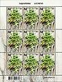 Stamp of Belarus - 2019 - Colnect 911337 - Lungwort Lichen Lobaria pulmonaria.jpeg