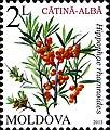 Stamps of Moldova, 2013-08.jpg