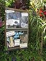 Starr-110330-4245-Strongylodon macrobotrys-habitat and garden signs-Garden of Eden Keanae-Maui (24988149381).jpg