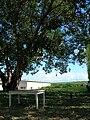Starr 050516-1219 Ficus religiosa.jpg