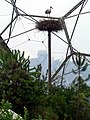 Stork Sculpture, Warm Temperate Biome, Eden Project - geograph.org.uk - 230300.jpg