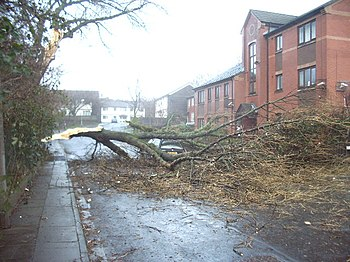 English: Storm Damage He must have regretted p...