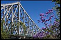 Story Bridge and Jacaranda-1and (4036280507).jpg