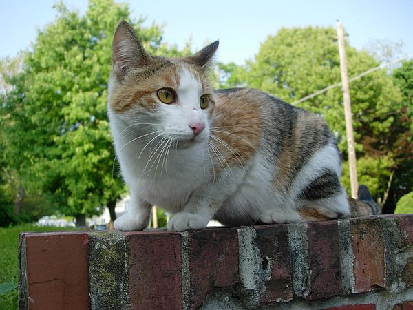 Stray cat on wall.jpg