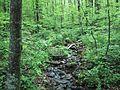 Stream running through forrest glen.jpg