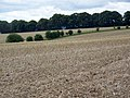 Stubble field, Compton Down - geograph.org.uk - 1452161.jpg