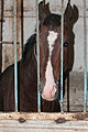 Studfarm in Turkmenistan - Flickr - Kerri-Jo (92).jpg