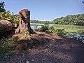 Stump by Reservoir at Churchville Nature Center.jpg