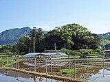 Sugihokowakenomikoto-jinja 20100601 (3).jpg