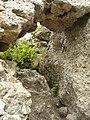 Sulovsky hrad 5.JPG