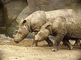 Джаван носорог знак рубль