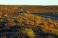 Suráfrica, Namaqualand 38.jpg