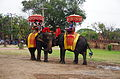 TH-ayutth-elefant-riding01.jpg