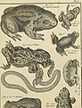 Tableau encyclopédique et méthodique des trois règnes de la nature - dédié et présenté a M. Necker, ministre d'État, and directeur général des Finances (1789) (14759414856).jpg