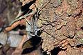 Tailless scorpion.JPG