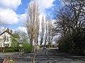 Tall Trees Penketh - geograph.org.uk - 1243452.jpg