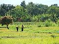 Tanzania planting rice.JPG