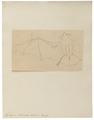 Taphozous bilineatus - 1700-1880 - Print - Iconographia Zoologica - Special Collections University of Amsterdam - UBA01 IZ20800011.tif