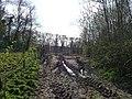 Taunton Deane , Muddy Track - geograph.org.uk - 1243592.jpg