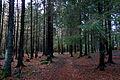 Teieskogen.jpg