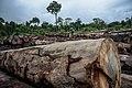 Terra Indígena Pirititi, Roraima (40652072890).jpg