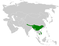 Tesia cyaniventer distribution map.png