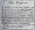 The.elephant.22.july.jpg
