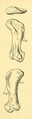The Osteology of the Reptiles-181 ffewedf dfg h iuhg.png