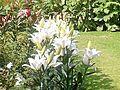 The White Flowers.jpg