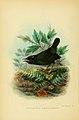 The birds of Tierra del Fuego (1907) (5974504625).jpg
