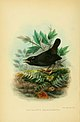 The birds of Tierra del Fuego (1907) (5974504625).jpg