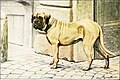 The book of dogs; an intimate study of mankind's best friend (1919) (20116475144).jpg