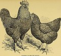 The poultry manual. A complete guide for the breeder and exhibitor (1911) (14740913556).jpg