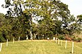 Thornhill Plantation Cemetery 2.JPG