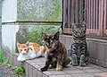 Three stray cats in Japan street, August 2014.jpg
