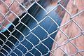 Through the Fence, Lake Powell, Near Page Arizona (3448807181).jpg